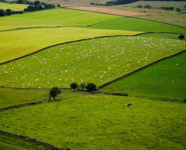 The future of farming and the countryside