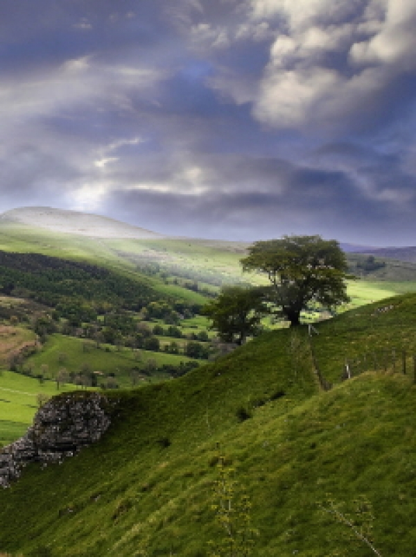 Where the wild things are - a 'future natural' countryside?