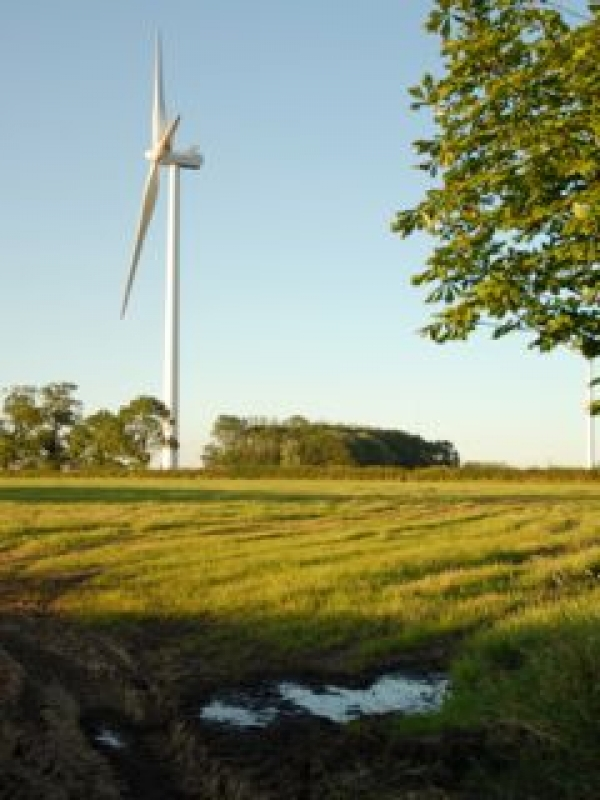 Avoid turbine 'buffer zones', councils told